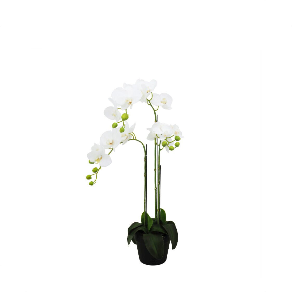 Pollyanna 3 Stalk Potted White Orchid