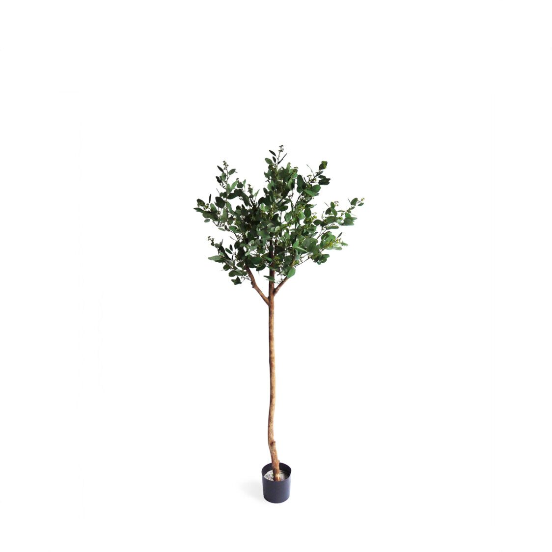Pollyanna Poppel Ball Potted Tree with Beans