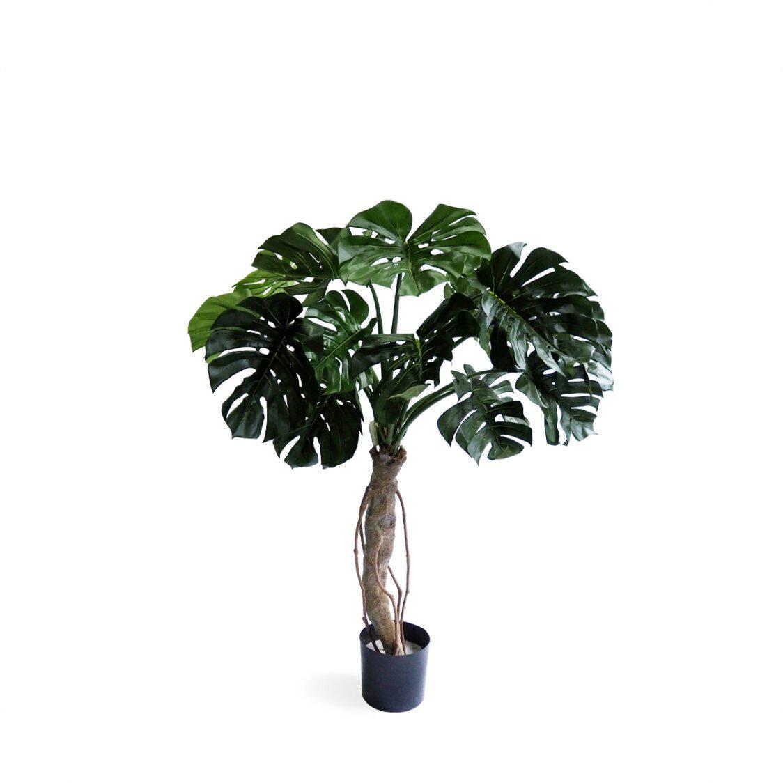 Pollyanna Spilt Philo Potted Plant